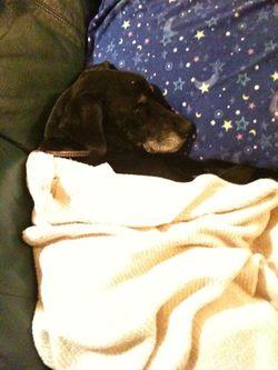 OREOは爆睡中