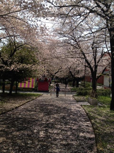 桜の花びらのホワイトカーペット