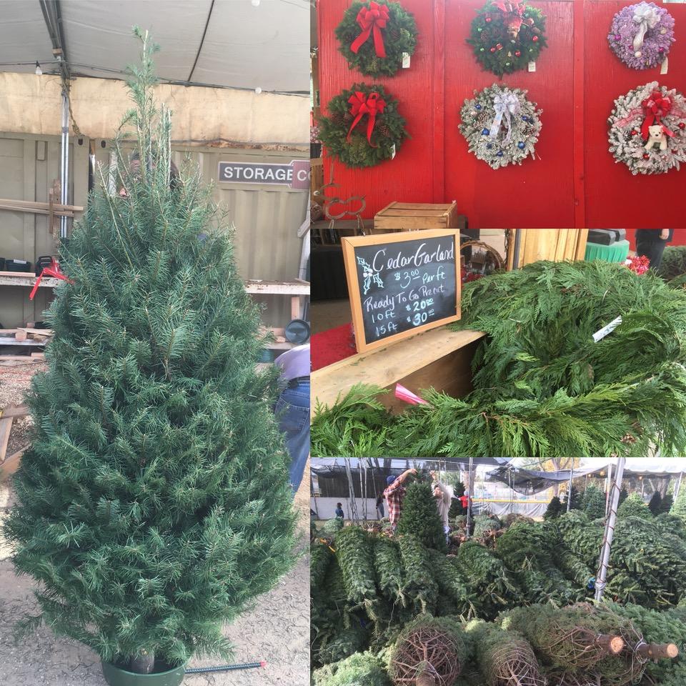 オレゴンファミリークリスマスツリー3