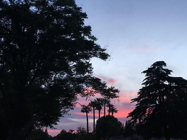 シンコ・デ・マヨはピンクの黄昏